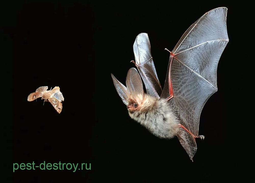 Польза летучих мышей